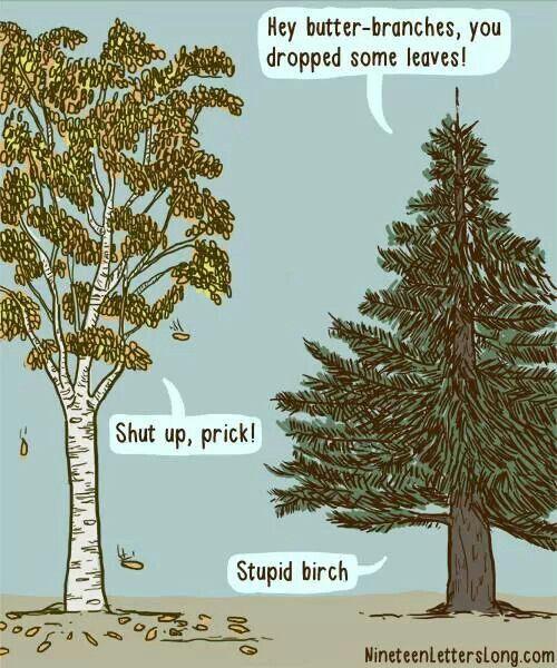 Stupid birtch
