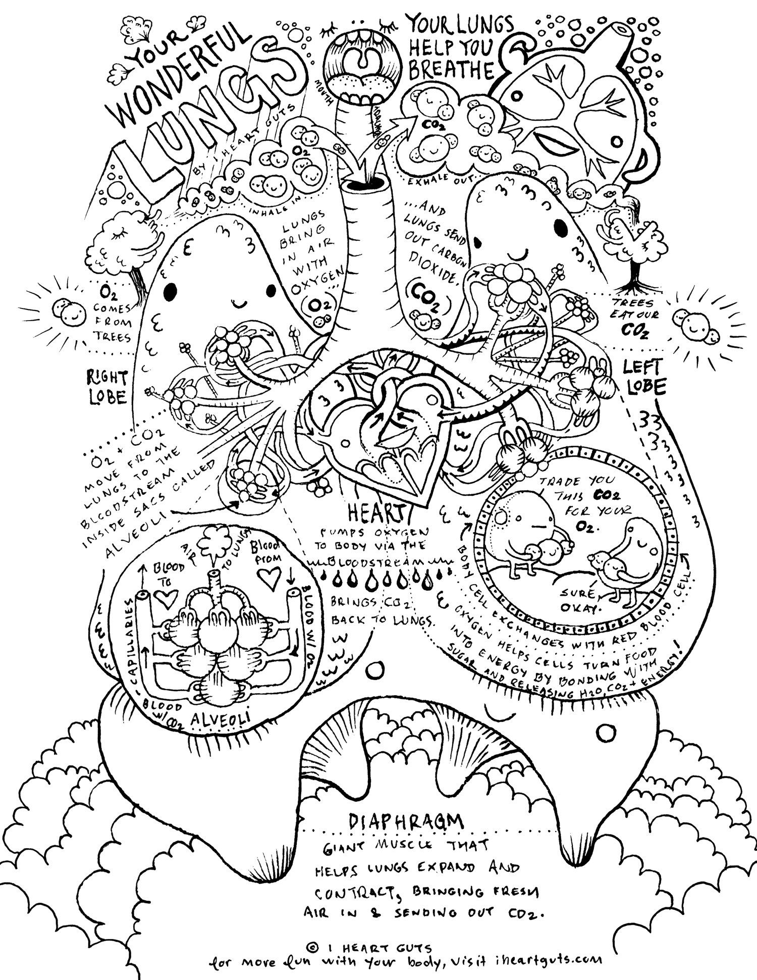 Respiratory System Coloring Page   Anatomy coloring book ...