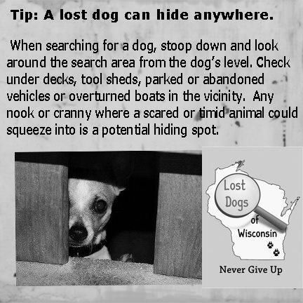 A Lost Dog Can Hide Anywhere.
