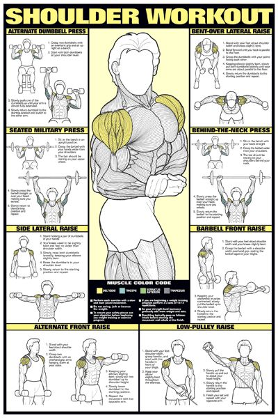 SHOULDER WORKOUT WALL CHART Professional Strength Training Fitness Gym Poster In