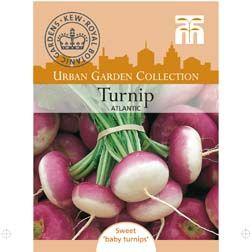 Turnip 'Atlantic'Brassica rapa (Rapifera Group) | Growing ... Turnip Companion Plants