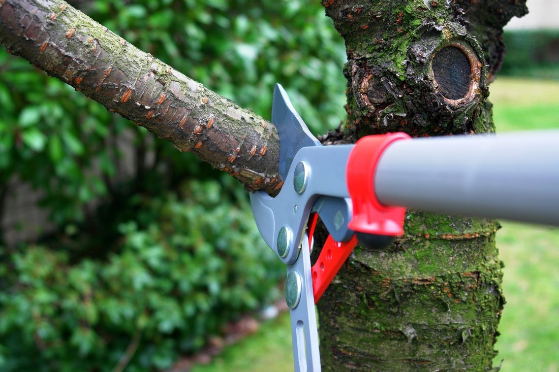 Hire A Skilled Tree Trimming Service For The Effective Growth Of Shrubs Tree Trimming Service Tree Trimming Tree Care
