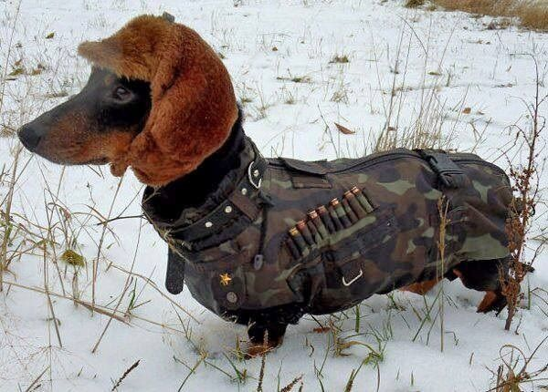 Seal Team Wiener Dog
