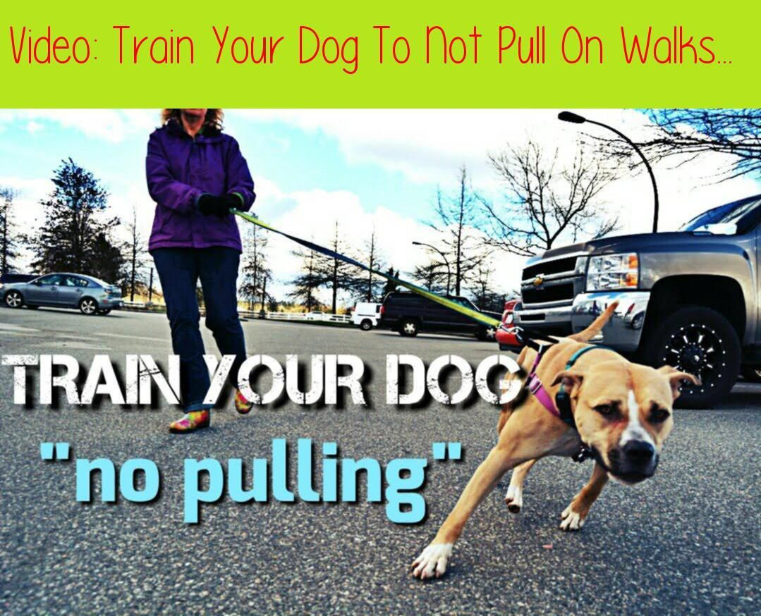 Dog Training At Home Tips Dogtrainingdog 2911275319