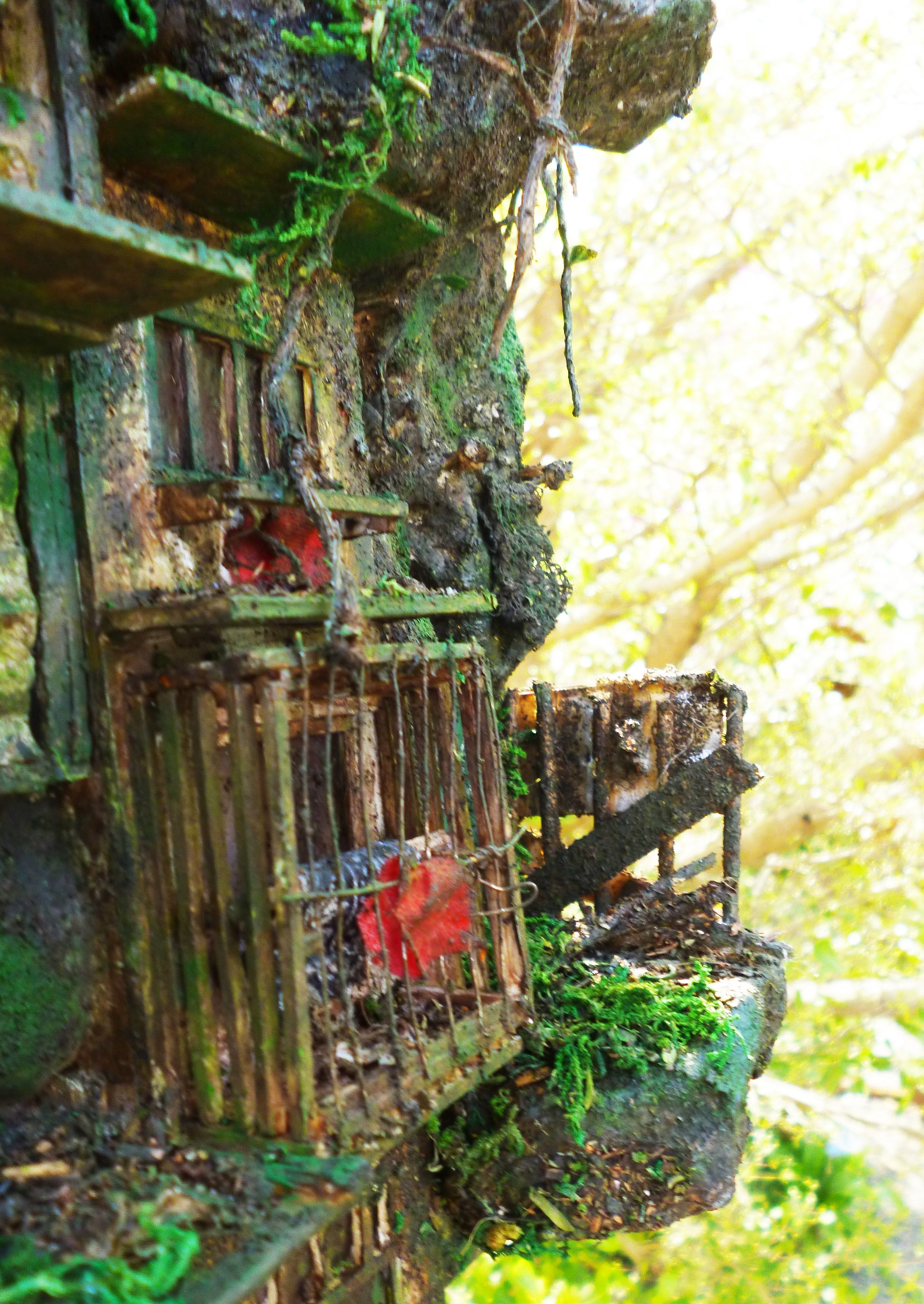 Abandoned building in the jungle (มีรูปภาพ)
