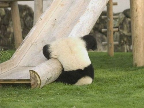 Riding the slide like a pro (Panda)