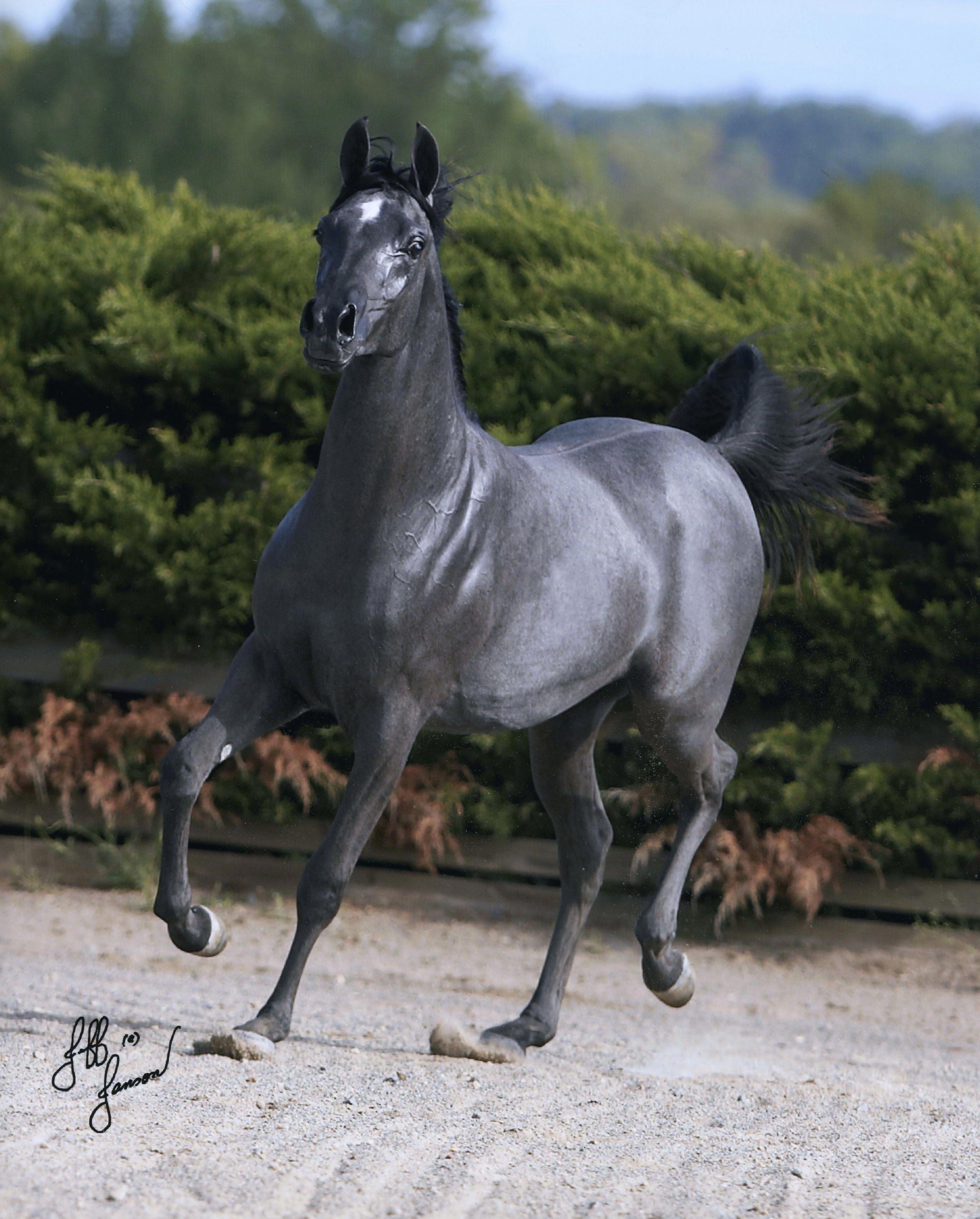 Картинки сивая лошадь