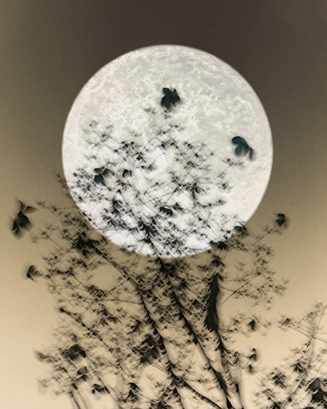 .We only dream of images we already have inside of us.  . - David Lynch...#art #photography by Ilona Langbroek..#artphotographer #PhotographyIsArt