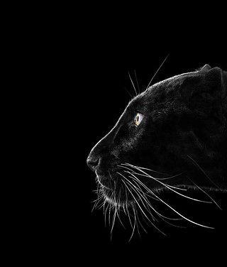 Pin von MITU ateliers auf Photography | Pinterest | Welt und Tier