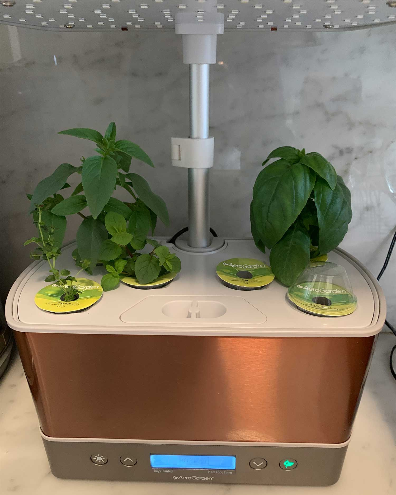 AeroGarden Harvest Review From Setup to Herbs in 1 Month