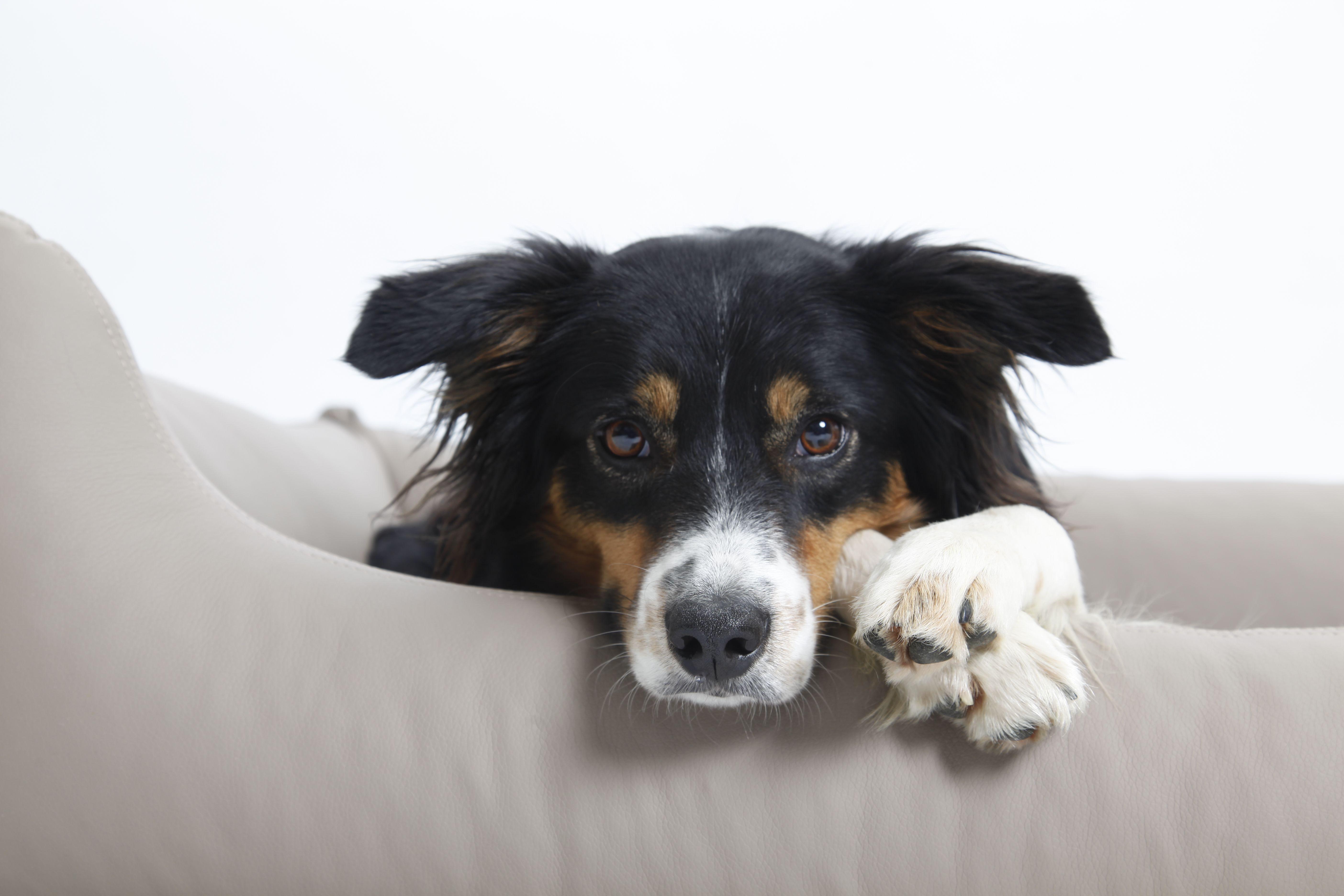 NEW In! Hundesofa Box Bed Saddle aus feinstem Art Leder, in Optik & Haptik wie Nappa Leder aus der Manufaktur DOGS in the CITY
