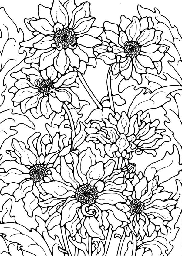 Chrysanthemum, : Chrysanthemum for the Love One Coloring Page ...