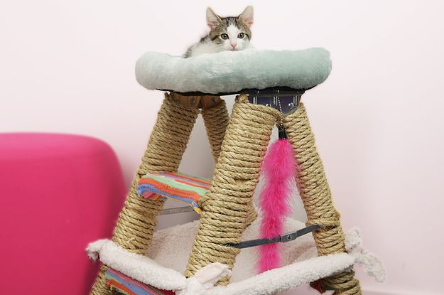 this cat jungle gym will have your feline on cloud nine all things