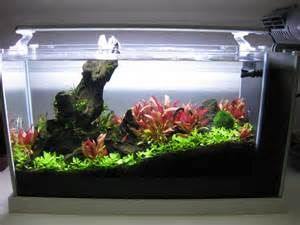 Fluval Spec V Aquascape Ecosia Freshwater Plants Aquascape Fish Aquarium Decorations