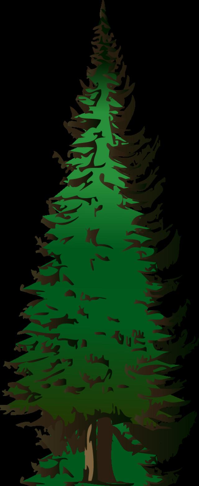 free maple tree clip art design evergreen tree maple tree pine tree free [ 640 x 1560 Pixel ]
