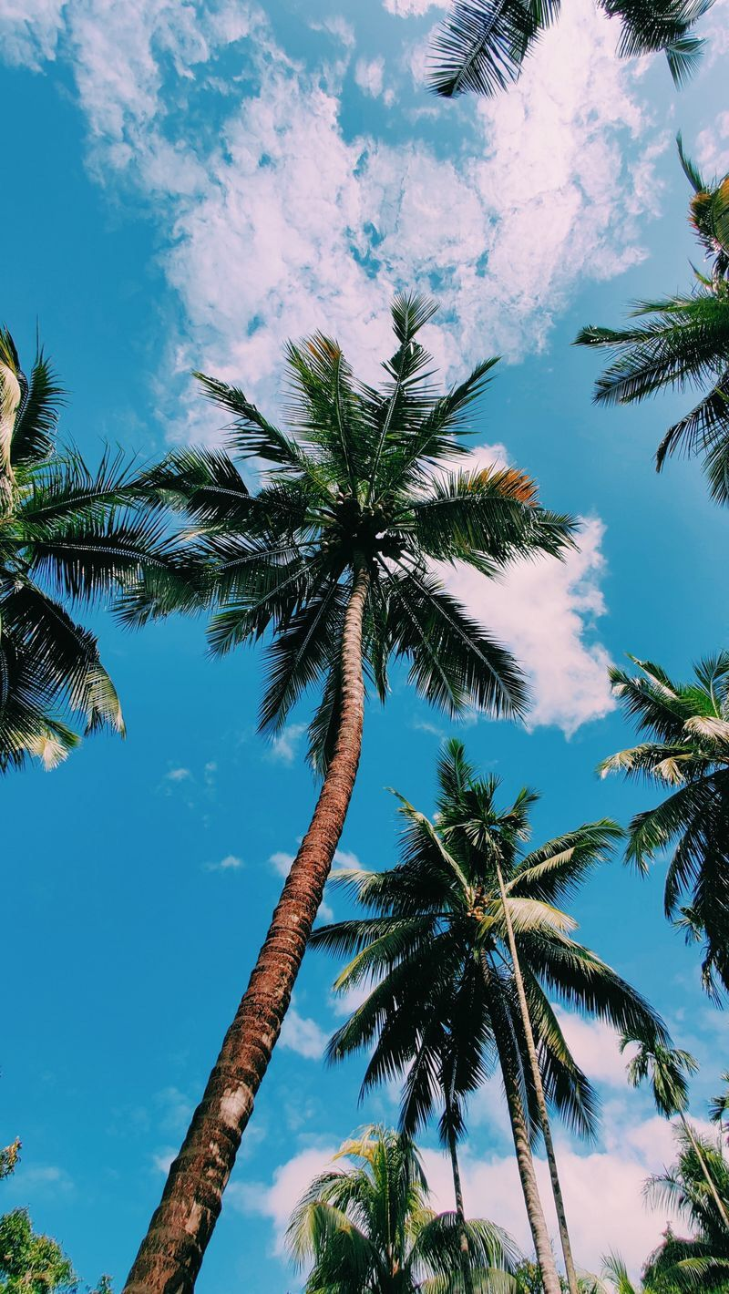 Summer Wallpaper Palm Tree Sky Aesthetic Summer Wallpaper Aesthetic Pictures Hd wallpaper summerpalm tree sky sun