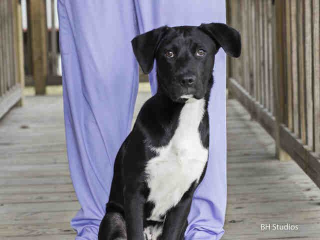 COOPER...HOUSTON, Animal Shelter