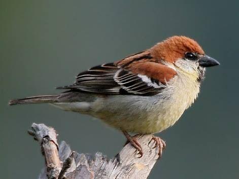 Lovely World Birds Sparrow Sparrow Bird