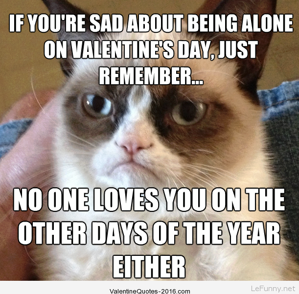 Funny Single Valentines Day Quotes Pictures Valentines Day