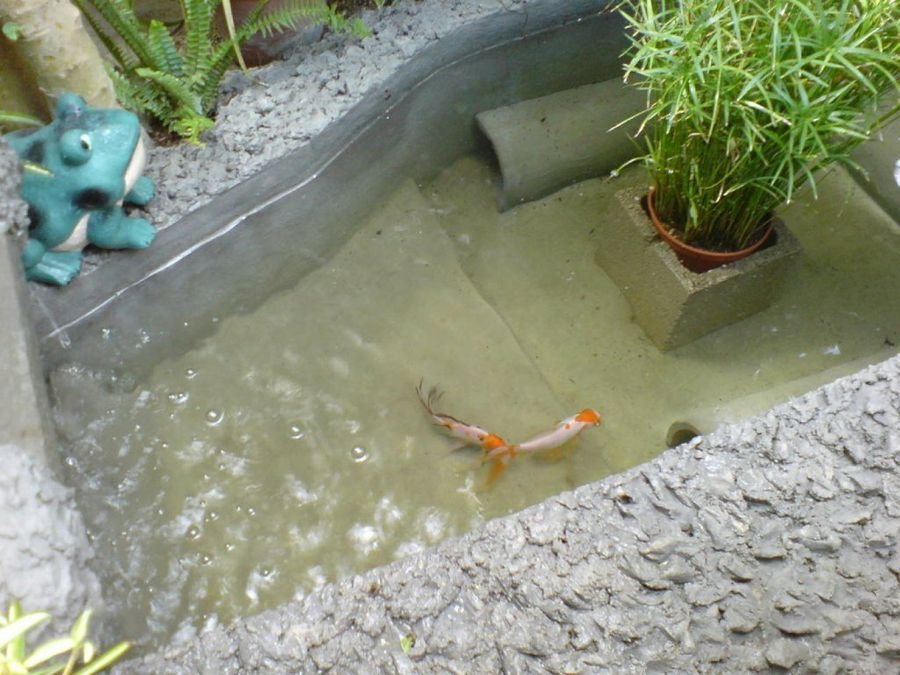 Estanques para peces con cascada buscar con google for Pileta con peces
