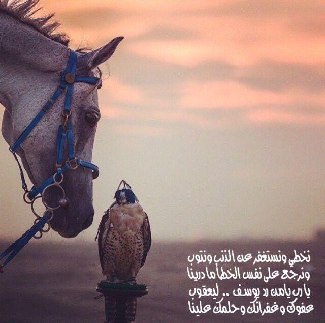 Pin By ʝɛɛɬɛƙ Al3nzii On عشق الخيل Pretty Horses Cute Animals Animals