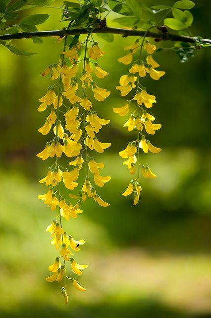 Fiori Giallo Ocra.Giallo Ocra Verde Haicai Estacao Das Flores Flores Amarelas