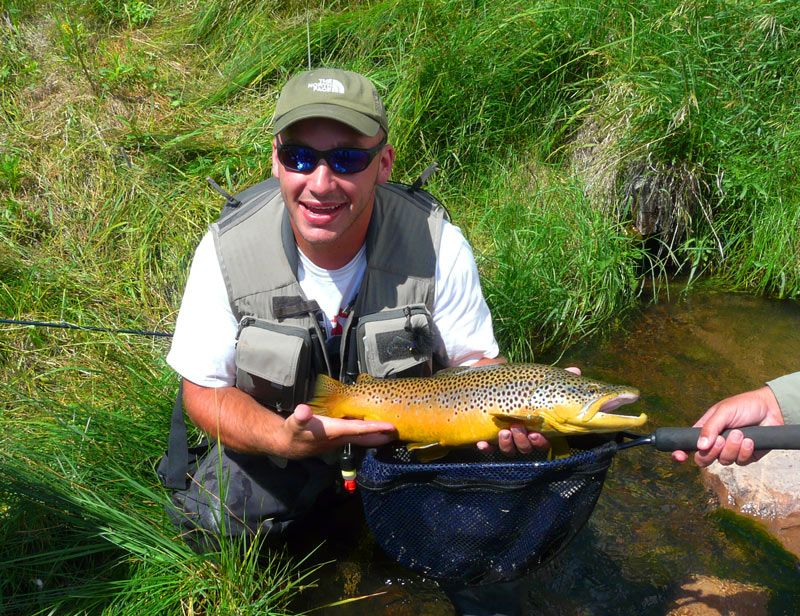 Now that 39 s a brown trout yellowstone river utah yes for Trout fishing utah