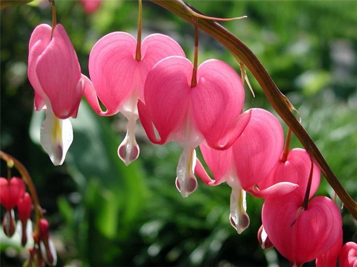 фото разбитое сердце цветы