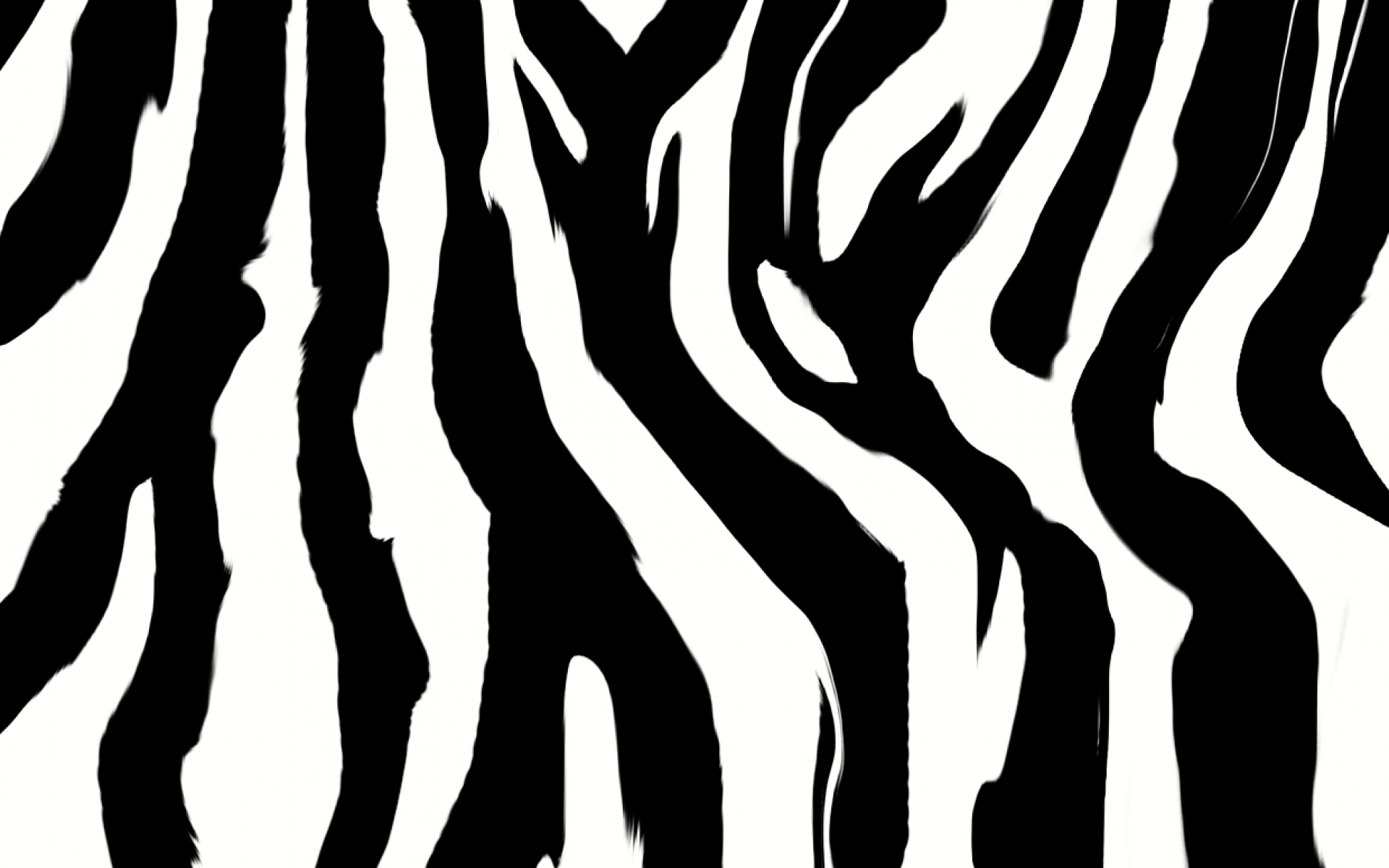 Zebra Backgrounds HD Wallpaper