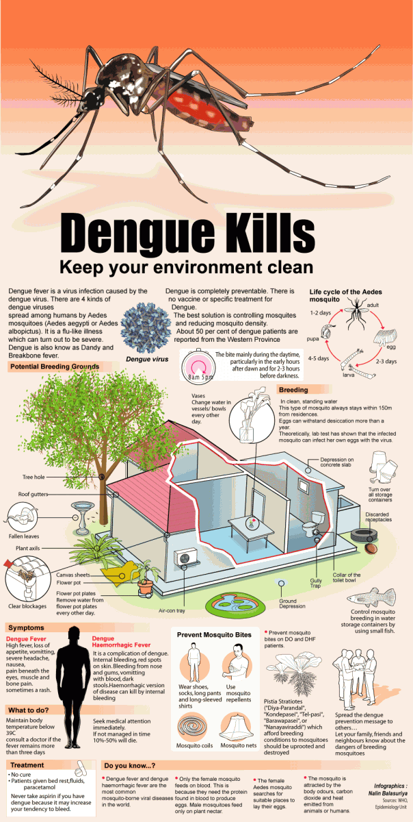 dengue fever infographic recommended health infograpics