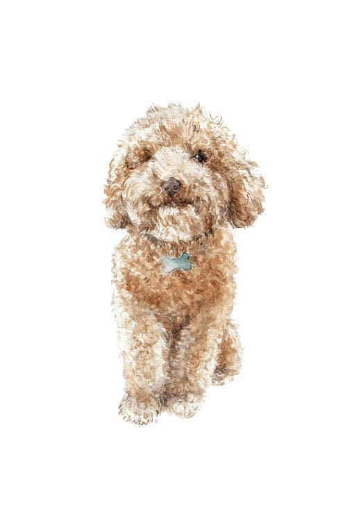 Apricot The Happy Poodle Puppy Canvas Art By Wandering Laur In