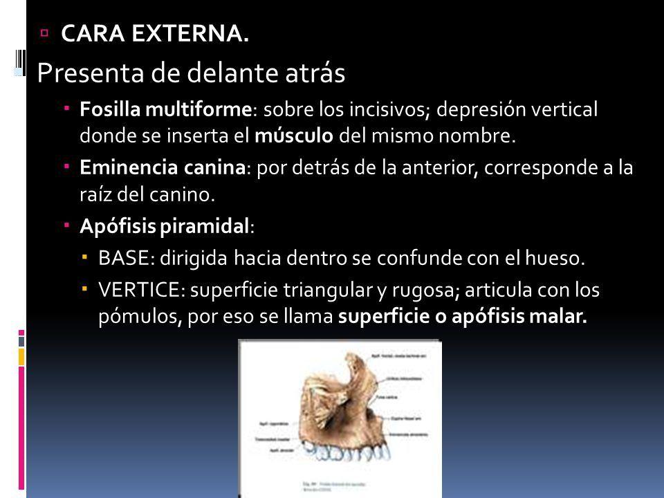 HUESOS DE LA CARA Anato iii. - ppt video online descargar | Huesos ...