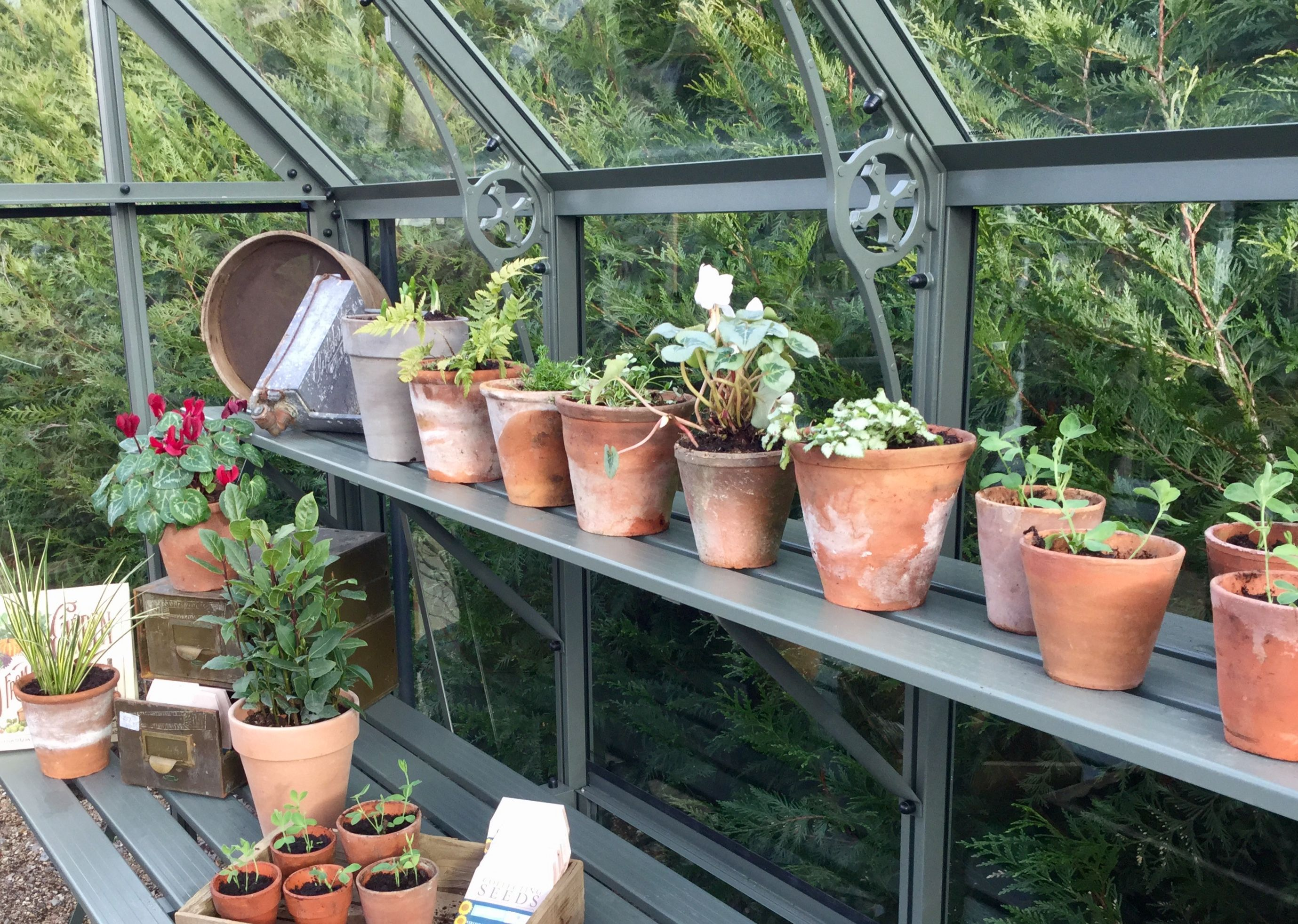 Vintage ceramic pots inside a Victorian Portico greenhouse ...