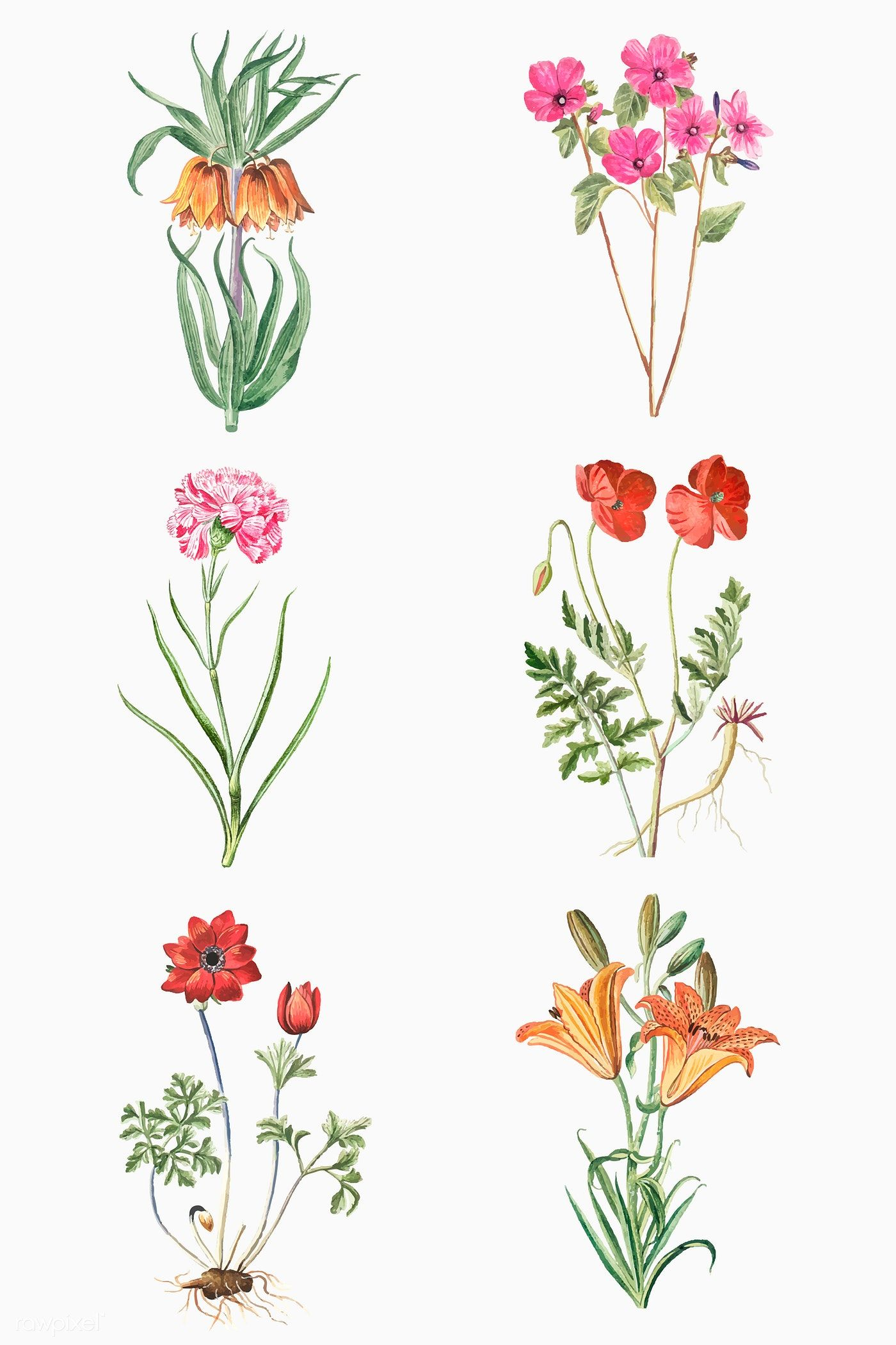 Download premium vector of Set of hand drawn plant vector