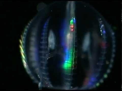 """【映像:PV】PlugResearchからリリースした Anthony Valadez:アンソニー・ヴァラデズ の""""Begins feat MIles Bonnie""""のPVが公開【クラブジャズ/ブレイクビーツ】"""