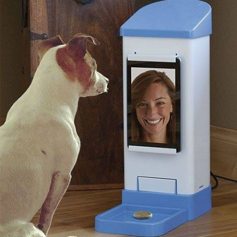 These Are The Most Ingenious Products From Shark Tank Your Pet