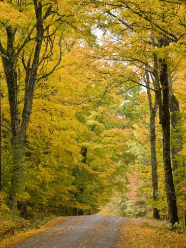 Leaves Fall from Sugar Maple Trees Lining a Dirt Road in Cabot, Vermont, Usa Photographic Print by Jerry & Marcy Monkman
