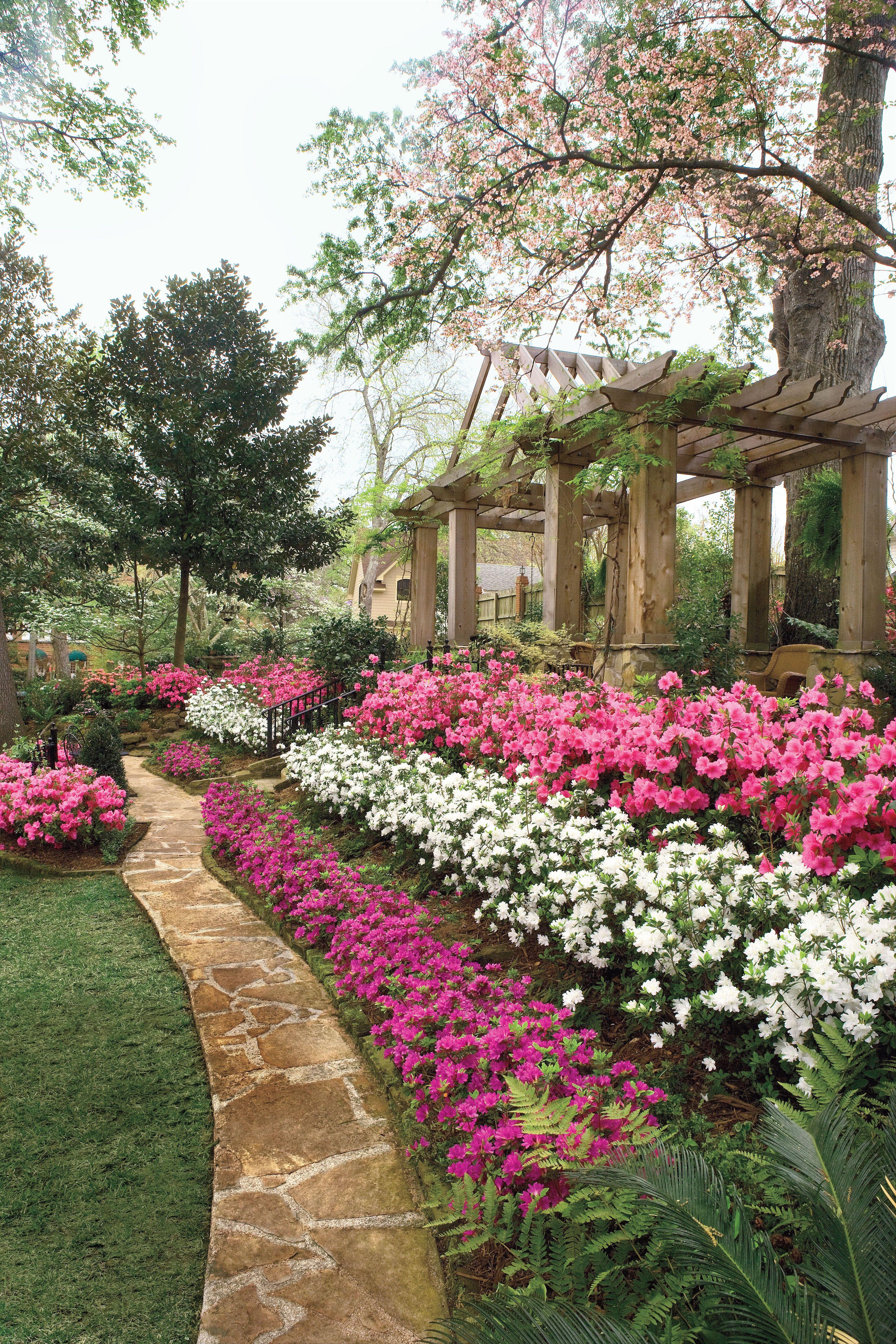Guy And Joan Pyron S Azalea Garden Azaleas Landscaping Azaleas Garden Beautiful Flowers Garden