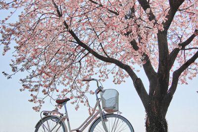 Under A Cherry Blossom Tree Pretty Nature Images Pink Blossom Tree Blossom Trees
