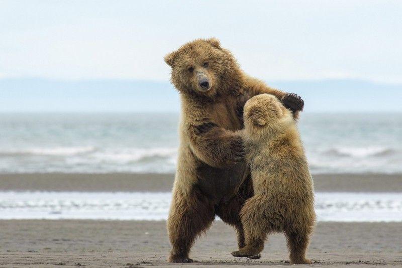 Медвежонок картинки приколы, летием формата