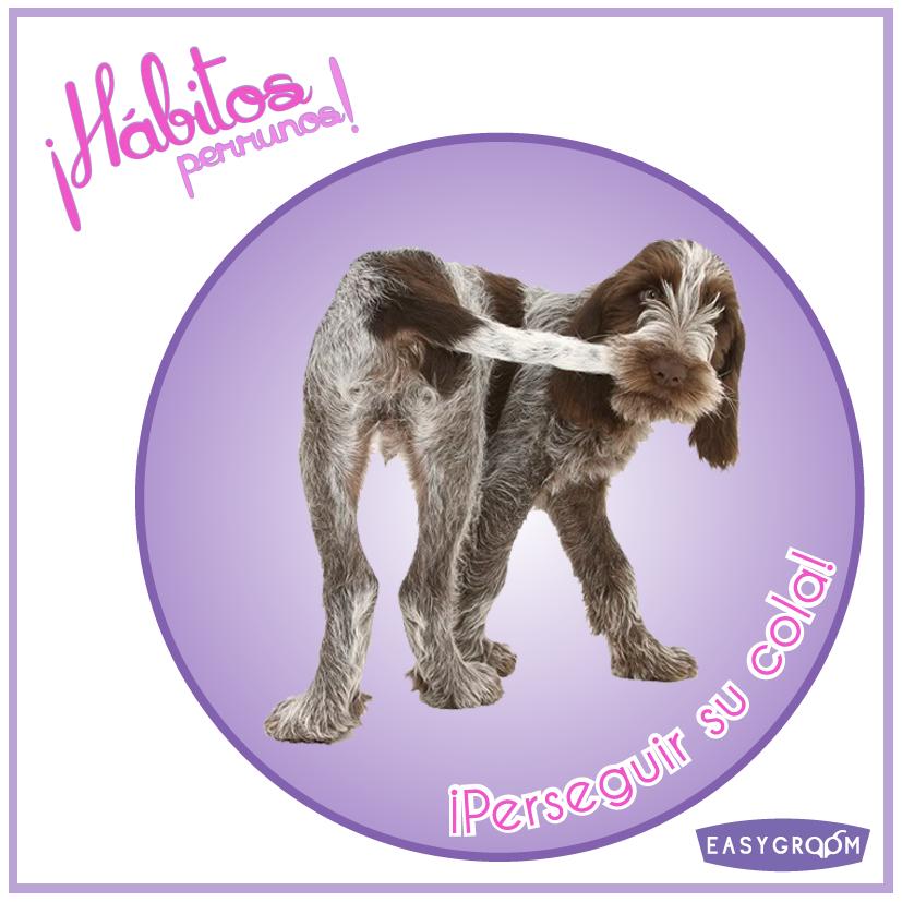 #Hábitosperrunos ¿A cuántos perritos les gusta perseguirse su colita?