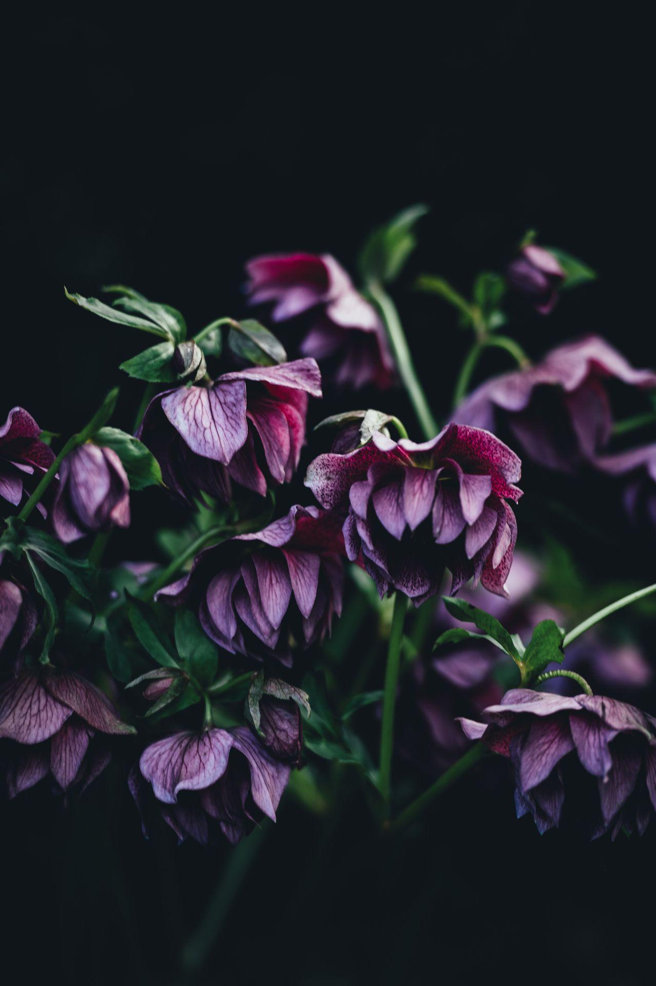 Ponderation Types of purple flowers, Plants, Purple flowers