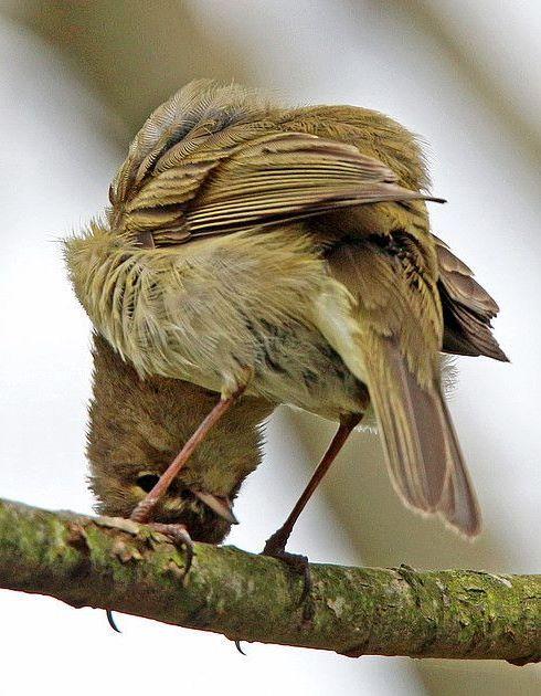 Who Goes There World Birds Birds 2 Love Birds Pretty Birds