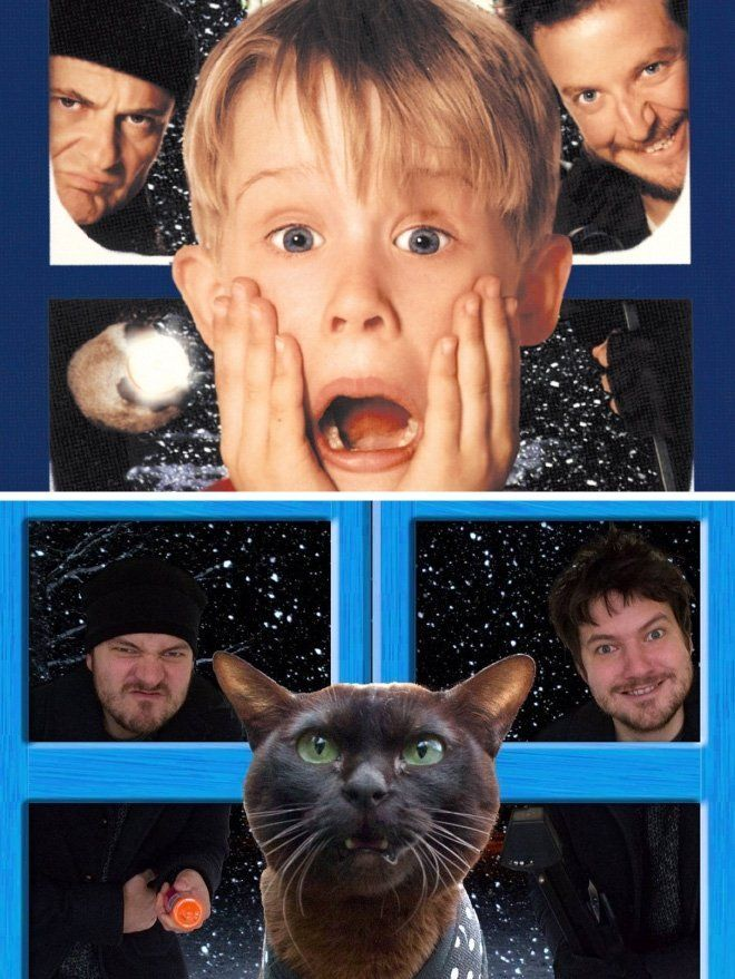 Couples Recreate Famous Movie Scenes With Their Cat Duo Famous Movie Scenes Movie Scenes Movie Characters