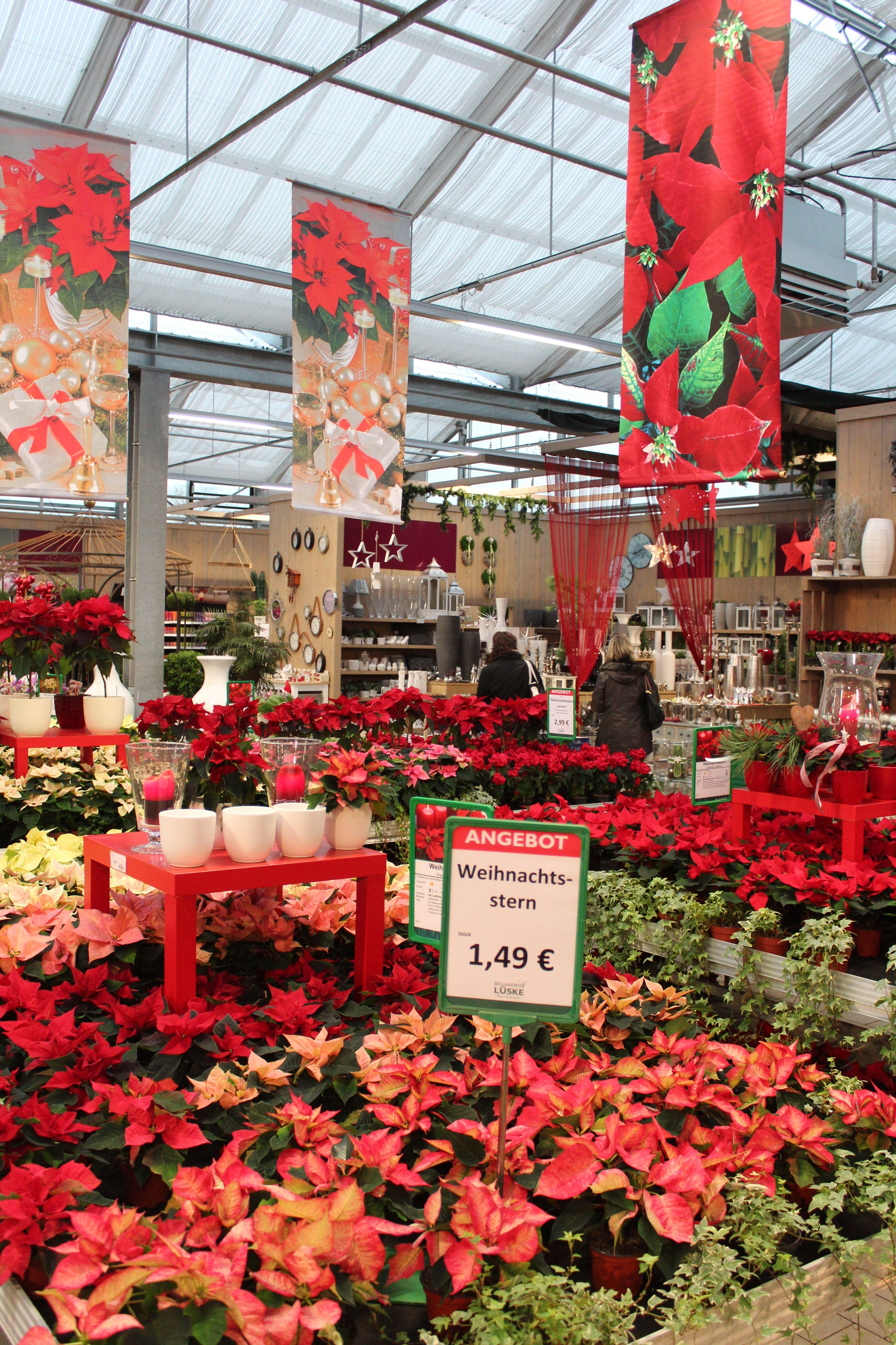 Photo Credits Oliver Mathys Garden Center Displays Flower