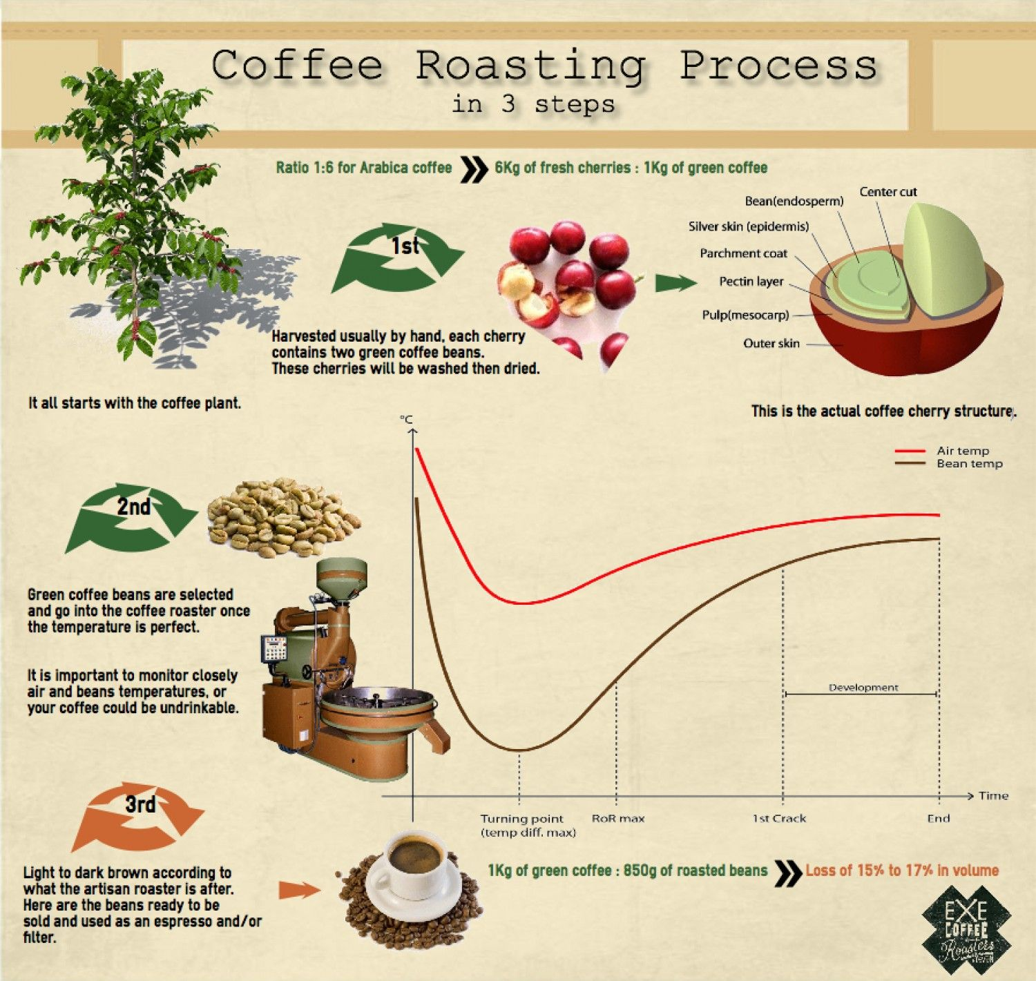 Coffee roasting process infographic Coffee roasting