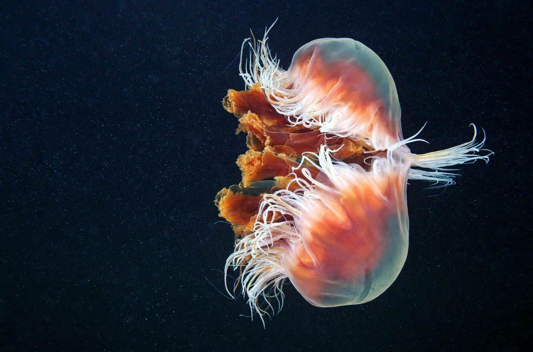 Глубоководные животные фото