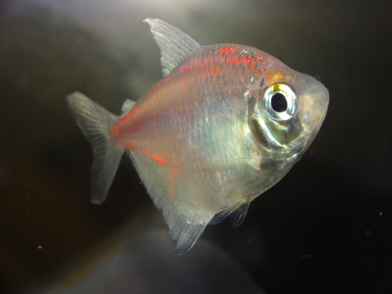 Aquarium Fish Rare Fish In India Aquarium For All Fish Blogspot Rare Fish Aquarium Fish Aquarium Fish Tank