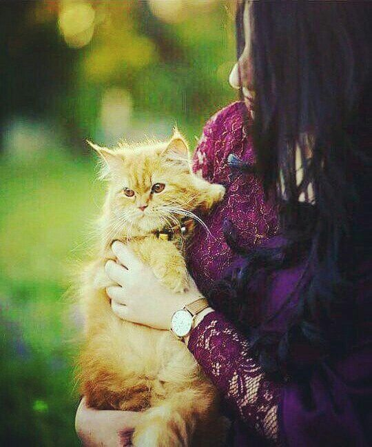 Dp Asma Mujeer Cute Girl Face Beautiful Cats Girls Dp