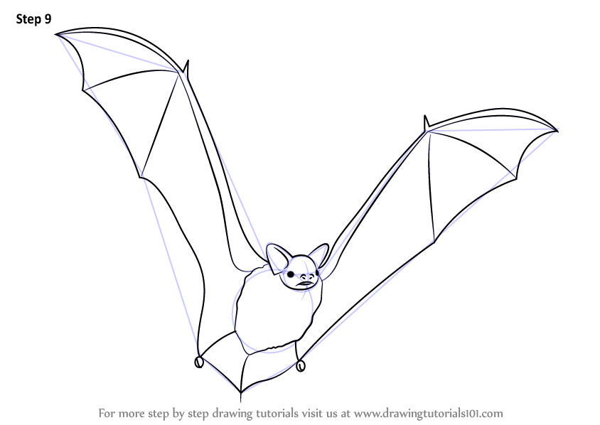 Learn How To Draw A Brown Bat Other Animals Step By